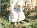 Sr Pierina nell'orto